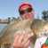 This carp took a large lure meant for a Murray cod. Carp are survivors and adapt well to different environments. Anglers regularly catch carp on flies and lures as well as bait.